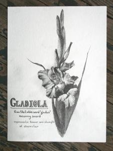 gladiola3